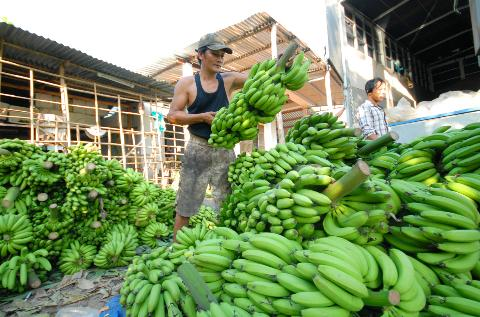 trồng chuối xuất khẩu