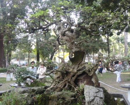 """Những cây kiểng """"độc"""" hút khách du Xuân"""