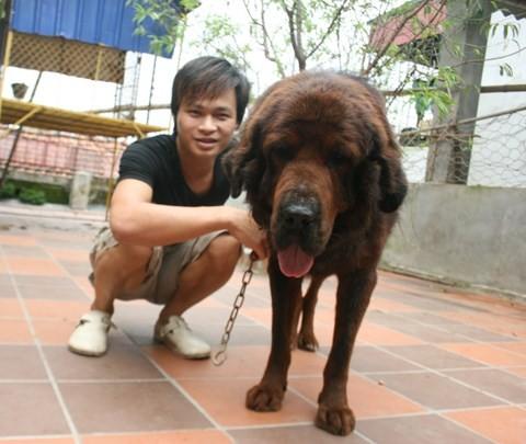 Anh Kiều Văn Hoàng bên chú chó ngao Tây Tạng
