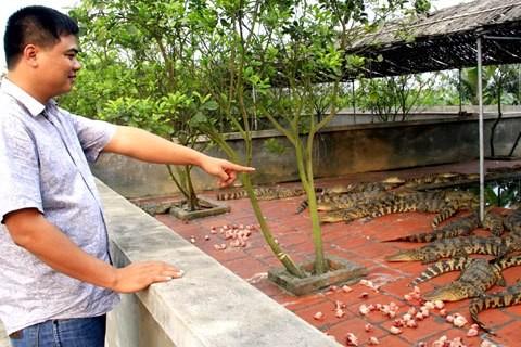 31 tuổi, Nguyễn Quang Hiển là chủ của hai trang trại cá sấu giá bạc tỷ.