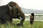Tình bạn giữa cô bé Việt 6 tuổi với chú voi già lên báo nước ngoài