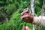 Rắn lục đuôi đỏ xuất hiện ở Lâm Đồng