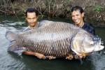 Kỳ công săn loài cá 'khôn ba năm, dại một giờ'