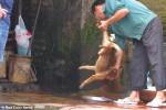 """""""Sốc"""" với cảnh cắt tiết chó tại Hà Nội lên trang chủ báo Anh"""