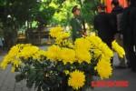 Cảm động dòng người xếp hàng thành kính dâng hoa lên Đại tướng Võ Nguyên Giáp
