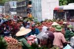 Bát nháo thu mua vải thiều Lục Ngạn