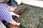 Kiếm 300 triệu/tháng nhờ nuôi lươn không bùn ở Sài Gòn