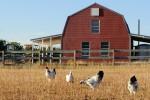 Đầu tư đất nông nghiệp an toàn hơn vàng